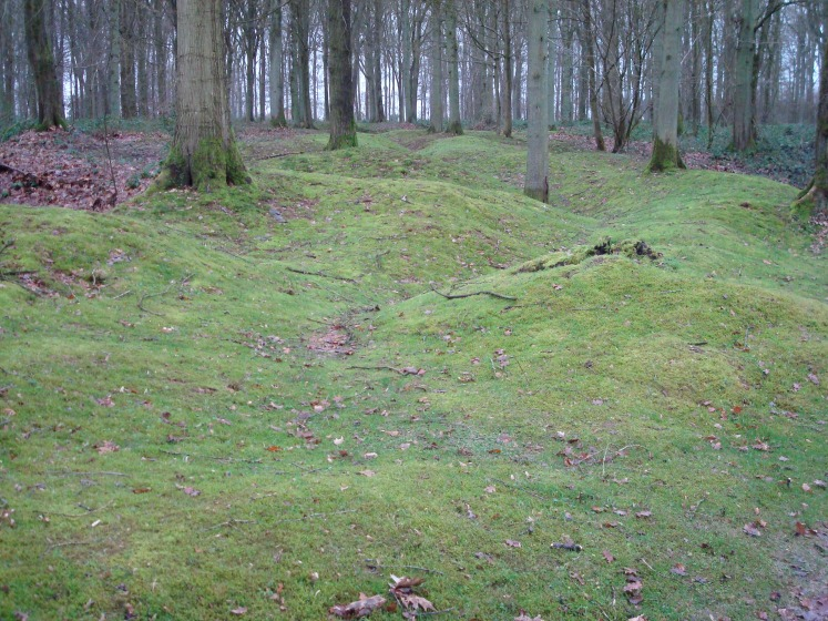 Former trenches at Delville Wood in northern France