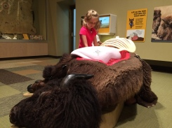 Bison in Then Now Wow at MN History Center