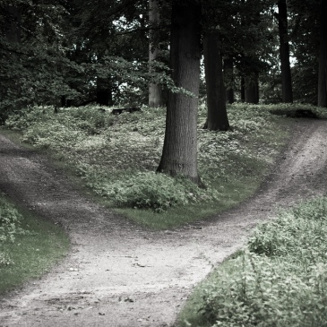 """crossroads"" in a forest"