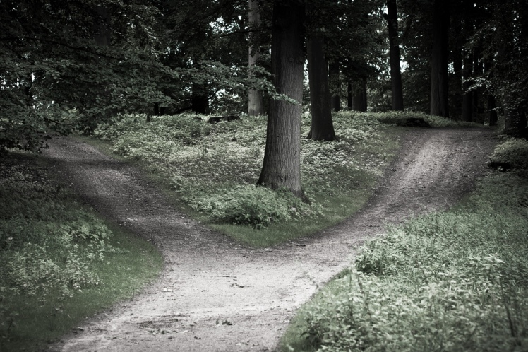 """""""crossroads"""" in a forest"""
