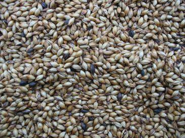 Close-up of seeds
