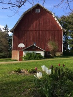 The barn and dairy at Grandpa's farm
