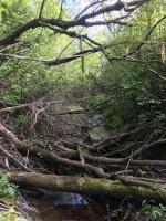 The stream that runs behind the farmhouse