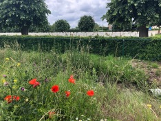 "Essex Farm Cemetery outside Ypres, Belgium, where a Canadian doctor named John McCrae wrote, ""In Flanders Fields the poppies grow / Between the crosses, row on row"""